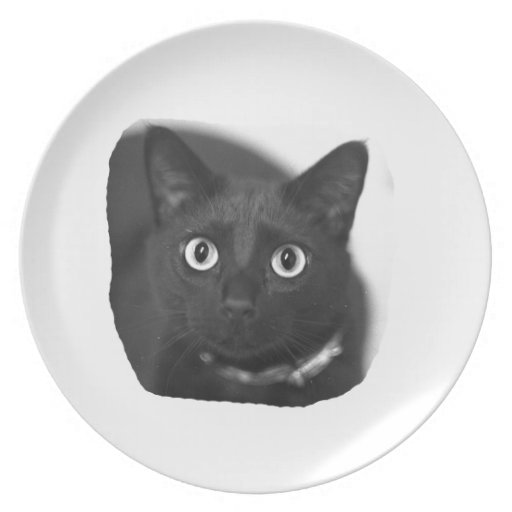 Grey Cat Big Eyes BW Picture Party Plates