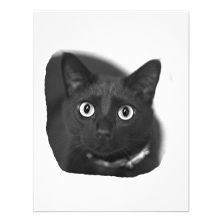 Grey Cat Big Eyes BW Picture Personalized Invite