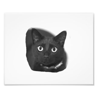 Grey Cat Big Eyes BW Picture Photo Print