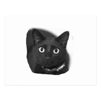 Grey Cat Big Eyes BW Picture Postcard