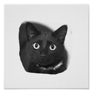 Grey Cat Big Eyes BW Picture Posters