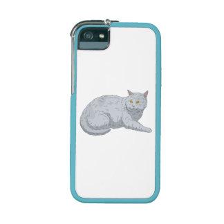 Grey Cat iPhone 5/5S Cases