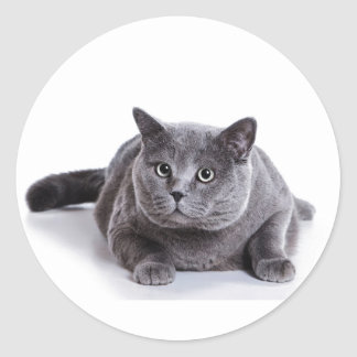 Grey Cat Classic Round Sticker
