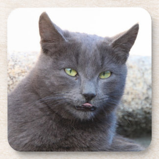 Grey Cat Cork Coaster