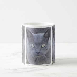 Grey Cat Face Close-up Coffee Mug