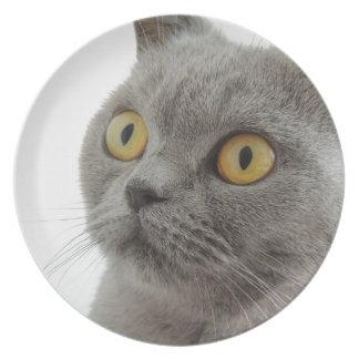 Grey Cat Golden Eyes Close-up Melamine Plate