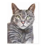 Grey Cat Green Eyes Painting Postcard