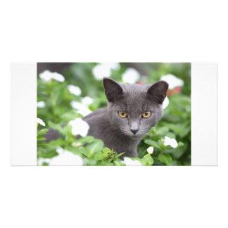 Grey cat in a garden photo card