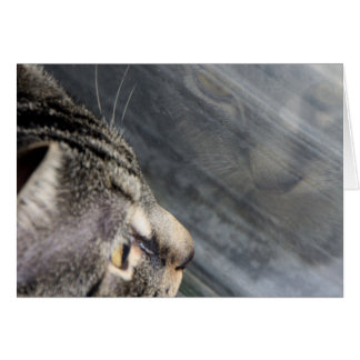 Grey Cat Looking Out the Window Card