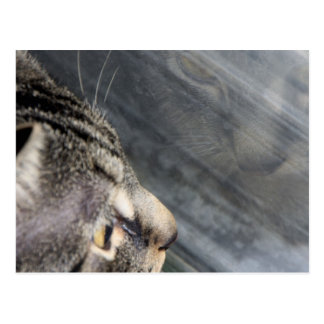 Grey Cat Looking Out the Window Postcard
