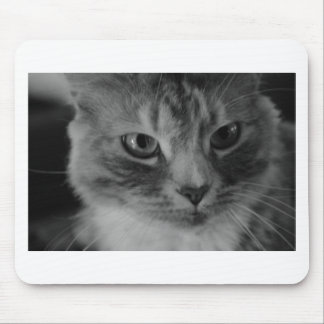 Grey Cat Mouse Pad