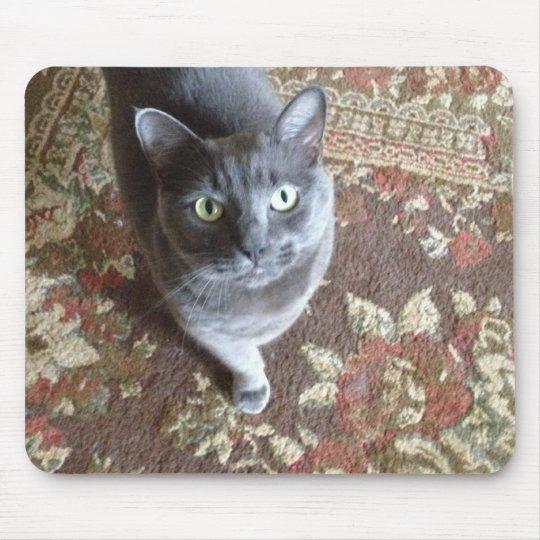 grey cat on oriental carpet mouse pad