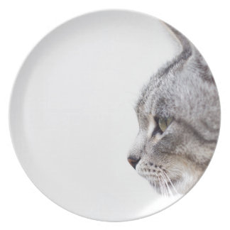 Grey cat party plate