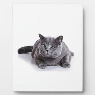 Grey Cat Plaque