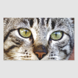 Grey cat rectangular sticker