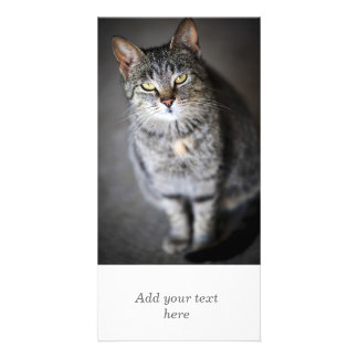 Grey cat sitting customized photo card