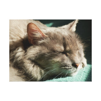 Grey Cat - Sleeping in Sunlight Canvas Print