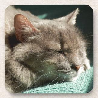 Grey Cat - Sleeping in Sunlight Coaster