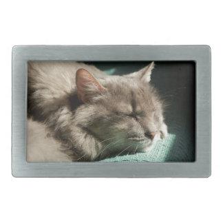 Grey Cat - Sleeping in Sunlight Rectangular Belt Buckle