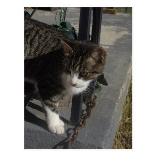 Grey Cat Stalking Postcard