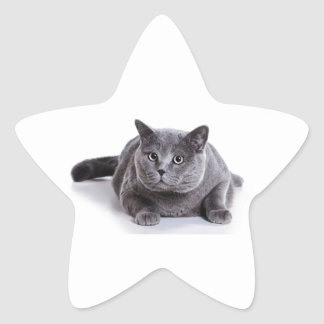 Grey Cat Star Sticker