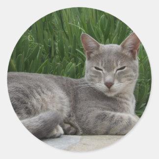 Grey Cat Stickers