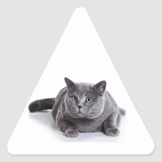 Grey Cat Triangle Sticker