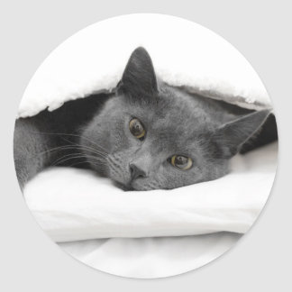 Grey Cat Under White Blanket Classic Round Sticker