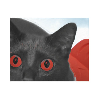 Grey Cat With Orange eyes Blended picture Stretched Canvas Prints