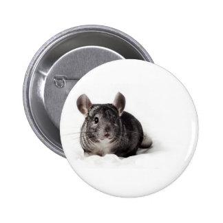 Grey Chinchilla Cute in Blanket Pinback Button