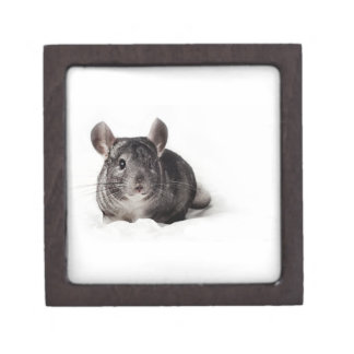 Grey Chinchilla Cute in Blanket Premium Keepsake Box