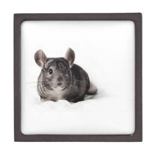 Grey Chinchilla Cute in Blanket Premium Gift Boxes
