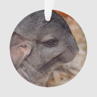grey chinchilla side head view animal