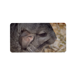 grey chinchilla side head view animal label