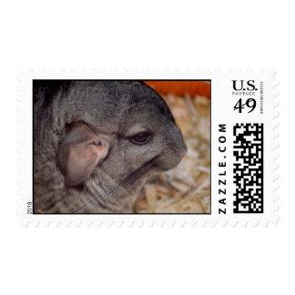 grey chinchilla side head view animal postage