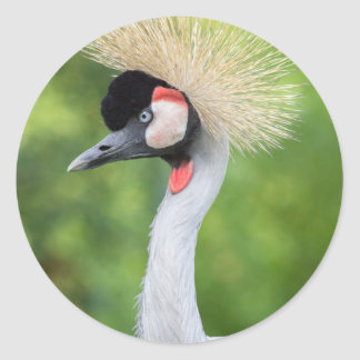 Grey crowned crane head and neck classic round sticker