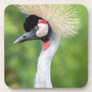 Grey crowned crane head and neck coaster