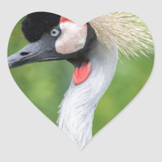 Grey crowned crane head and neck heart sticker