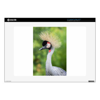 Grey crowned crane head and neck laptop skins