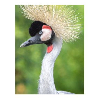 Grey crowned crane head and neck letterhead
