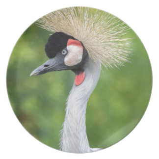 Grey crowned crane head and neck melamine plate