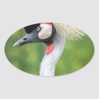Grey crowned crane head and neck oval sticker