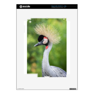 Grey crowned crane head and neck skin for the iPad 2