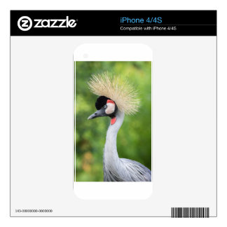 Grey crowned crane head and neck skins for the iPhone 4