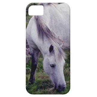 Grey Dartmoor Pony Grazeing Autunm iPhone SE/5/5s Case