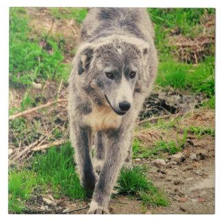 Grey dog tiles