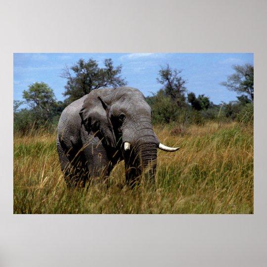 Grey Elephant Grasslands Poster