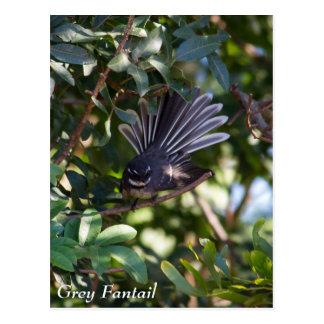 Grey Fantail Postcards