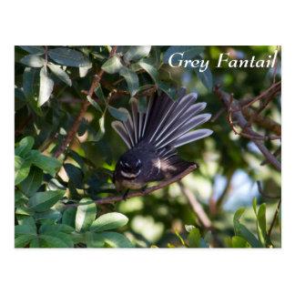 Grey Fantail postcard