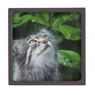 Grey Fuzzy Kitty Cat Gift Box